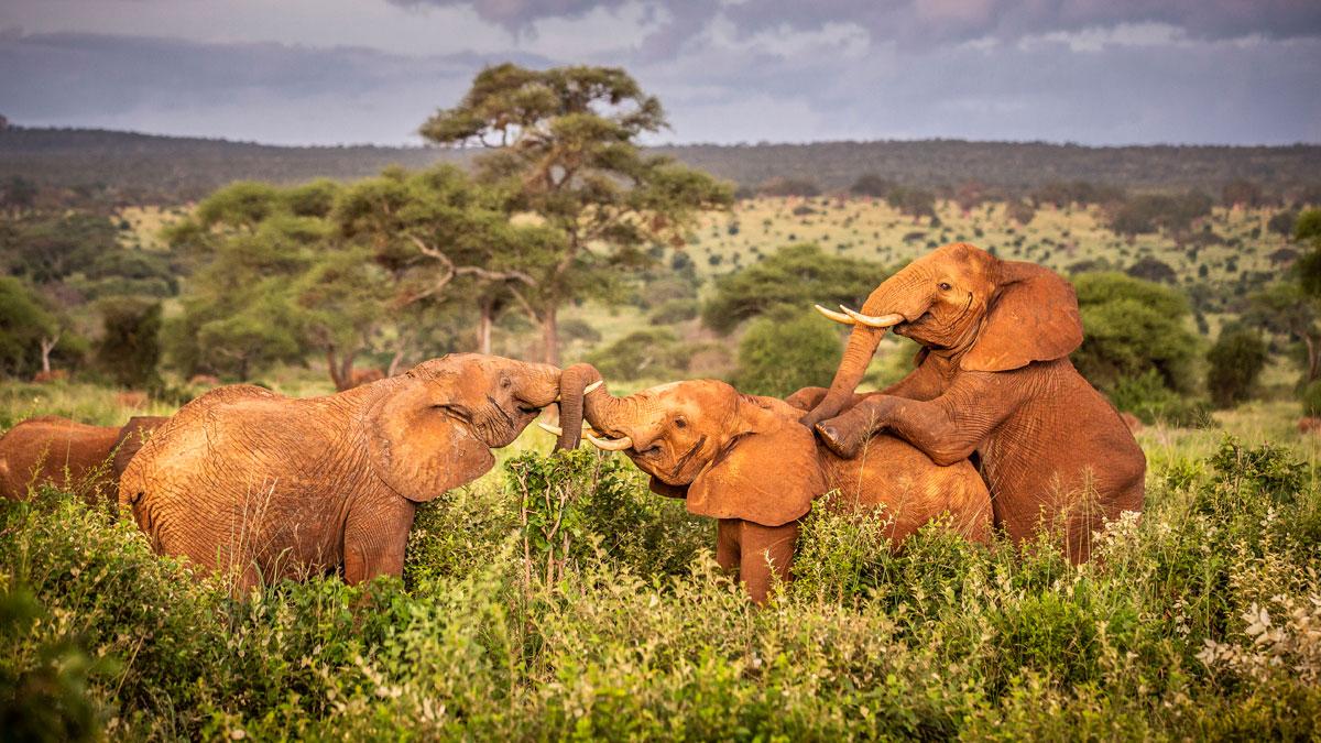 Moments of Tanzania